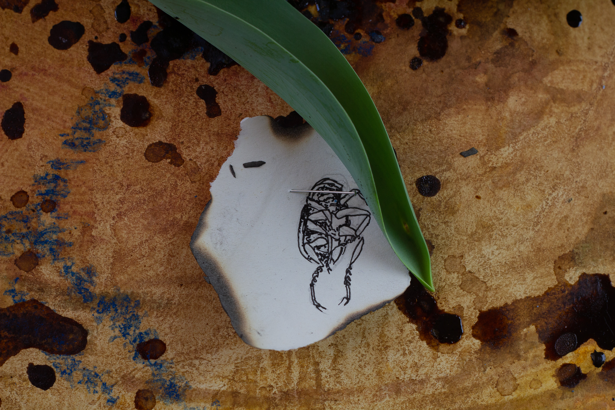 Close-up of the tulip leaf and illustration of a dead bug