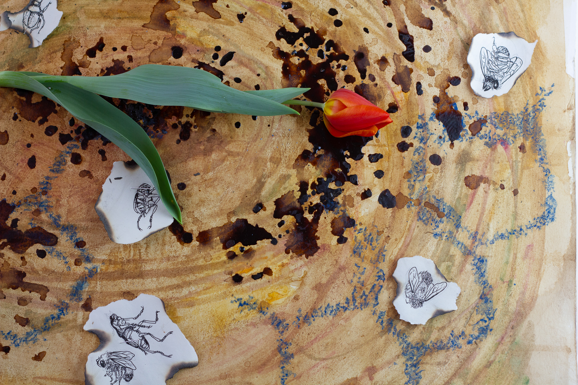 Close-up of the tulip petals and stem of the tulip circled by illustration of dead insects